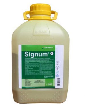 SIGNUM – 1 kg
