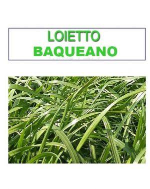 LOIETTO BAQUEANO – 25 kg
